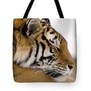 Tiger Sleeping Tote Bag