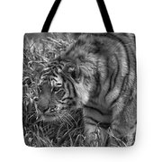 Tiger Stalking In Black And White Tote Bag