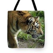 Tiger Stalking Tote Bag
