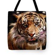 Tiger Stare Tote Bag