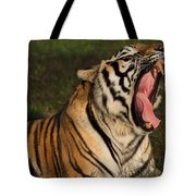 Tiger Teeth Tote Bag