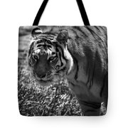 Tiger With A Cold Stare Tote Bag