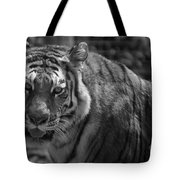 Tiger With A Fixed Stare Tote Bag
