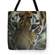 Tiger You Looking At Me Tote Bag