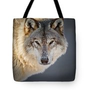 Timber Wolf Christmas Card French 21 Tote Bag