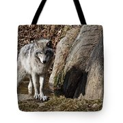 Timber Wolf In Pond Tote Bag