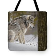 Timber Wolf In Snow Tote Bag