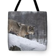 Timber Wolf On Hill Tote Bag