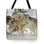 Timber Wolf  Pair Montana Tote Bag