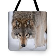 Timber Wolf Pictures 1042 Tote Bag