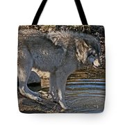 Timber Wolf Pictures 1101 Tote Bag