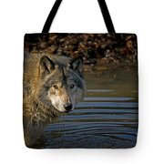 Timber Wolf Pictures 1103 Tote Bag