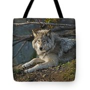 Timber Wolf Pictures 1148 Tote Bag