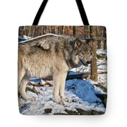 Timber Wolf Pictures 1175 Tote Bag