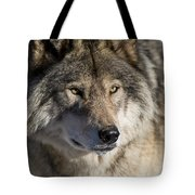 Timber Wolf Pictures 1218 Tote Bag