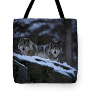 Timber Wolf Pictures 1233 Tote Bag