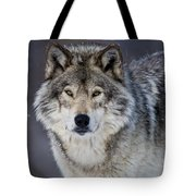 Timber Wolf Pictures 1271 Tote Bag