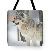 Timber Wolf Pictures 1302 Tote Bag