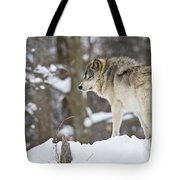 Timber Wolf Pictures 1306 Tote Bag