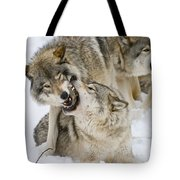 Timber Wolf Pictures 1314 Tote Bag