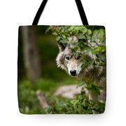 Timber Wolf Pictures 1328 Tote Bag