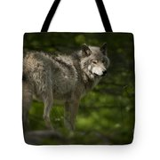 Timber Wolf Pictures 1336 Tote Bag