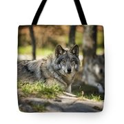Timber Wolf Pictures 1363 Tote Bag