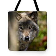 Timber Wolf Pictures 1365 Tote Bag