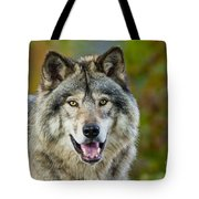 Timber Wolf Pictures 1388 Tote Bag
