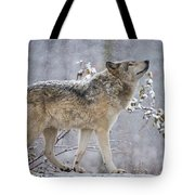 Timber Wolf Pictures 1401 Tote Bag
