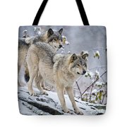 Timber Wolf Pictures 1417 Tote Bag