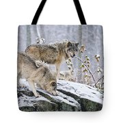 Timber Wolf Pictures 1420 Tote Bag