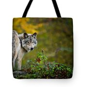 Timber Wolf Pictures 1627 Tote Bag