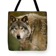 Timber Wolf Pictures 1629 Tote Bag