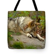 Timber Wolf Pictures 1646 Tote Bag