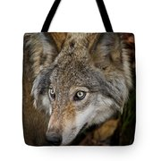 Timber Wolf Pictures 1660 Tote Bag