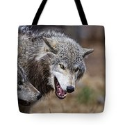 Timber Wolf Pictures 173 Tote Bag