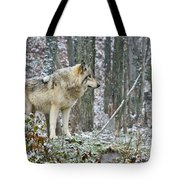 Timber Wolf Pictures 185 Tote Bag