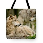 Timber Wolf Pictures 192 Tote Bag