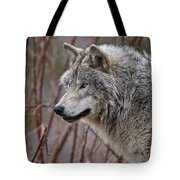 Timber Wolf Pictures 197 Tote Bag