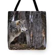 Timber Wolf Pictures 203 Tote Bag
