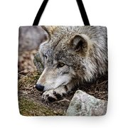Timber Wolf Pictures 205 Tote Bag