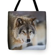Timber Wolf Pictures 259 Tote Bag