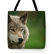 Timber Wolf Pictures 261 Tote Bag
