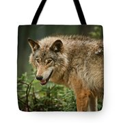 Timber Wolf Pictures 262 Tote Bag