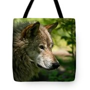 Timber Wolf Pictures 263 Tote Bag
