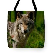 Timber Wolf Pictures 266 Tote Bag