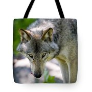 Timber Wolf Pictures 294 Tote Bag