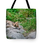 Timber Wolf Pictures 329 Tote Bag