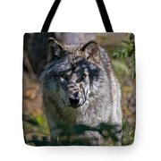 Timber Wolf Pictures 405 Tote Bag